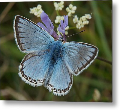 Blue Butterfly Metal Print by Ron Harpham