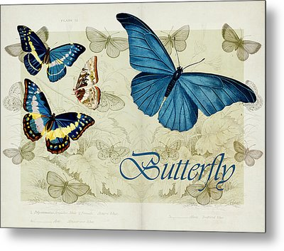 Blue Butterfly - S01a Metal Print by Variance Collections
