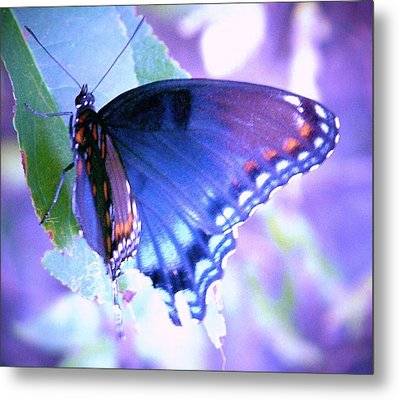 Blue Butterfly Metal Print by Shirley Moravec