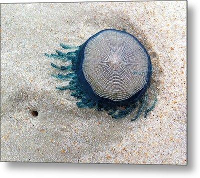 Blue Button #2 Metal Print by Paul Rebmann