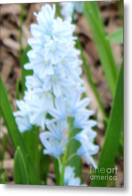 Blue Cone Flower Metal Print