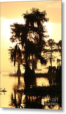 Metal Print featuring the photograph Blue Cypress Yellow Light by Paul Rebmann