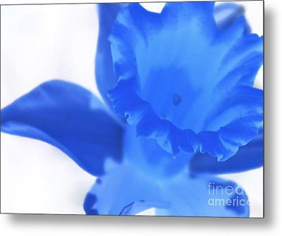 Metal Print featuring the photograph Blue Daffodil by Andy Prendy