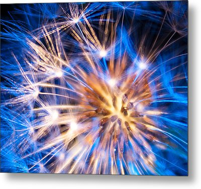 Blue Dandelion Up Close Metal Print