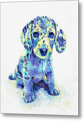Blue Dapple Dachshund Puppy Metal Print