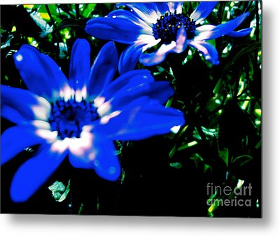 Blue Daze Metal Print by Cathy Dee Janes