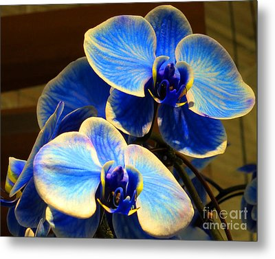 Blue Diamond Orchids Metal Print by Patricia Januszkiewicz