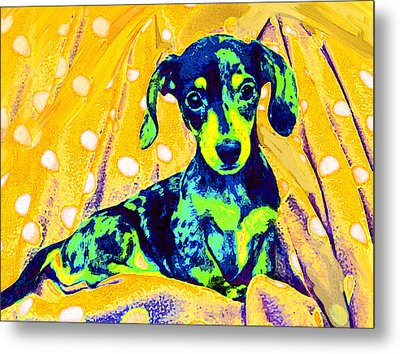 Blue Doxie Metal Print
