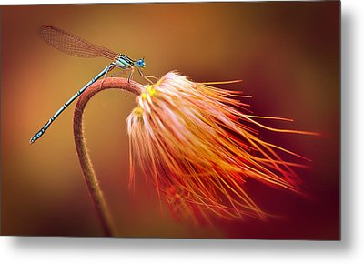Blue Dragonfly On A Dry Flower Metal Print
