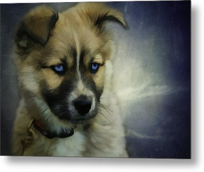 Blue Eyes Metal Print by Jacque The Muse Photography