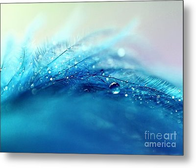 Blue Feather Metal Print by Sylvia Cook