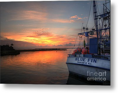 Blue Fin Morning Metal Print by Terry Rowe