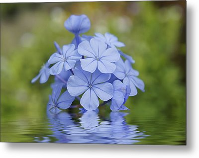 Blue Flowers Metal Print by Aged Pixel