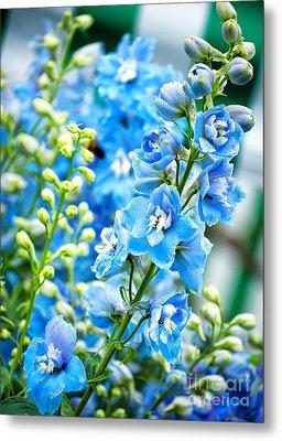 Blue Flowers Metal Print by Antony McAulay