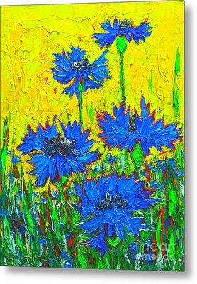 Blue Flowers - Wild Cornflowers In Sunlight  Metal Print by Ana Maria Edulescu