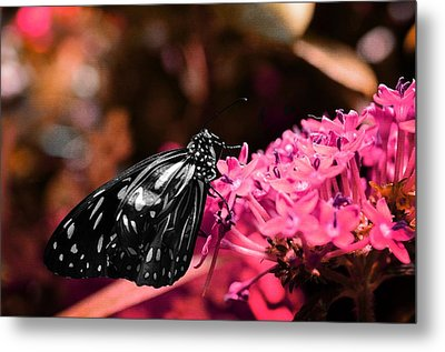 Blue Glassy Tiger Butterfly Metal Print by Marianna Mills