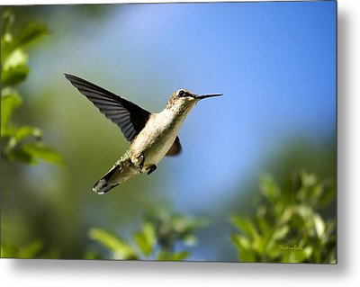 Blue Green Hummingbird Art Metal Print by Christina Rollo