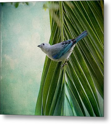 Metal Print featuring the photograph Blue Grey Tanager On A Palm Tree by Peggy Collins