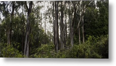 Blue Gum Eucalyptus Forest Metal Print by Brad Scott