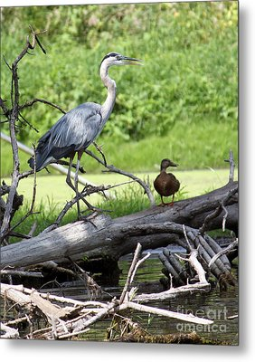 Metal Print featuring the photograph Blue Heron And Friend by Debbie Hart