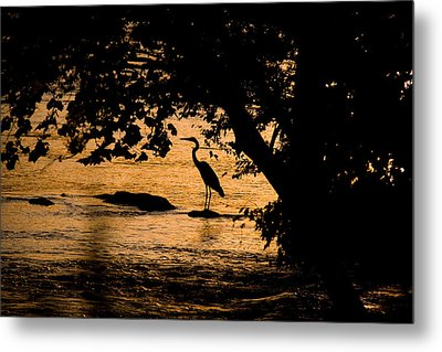 Blue Heron At Sunset Metal Print