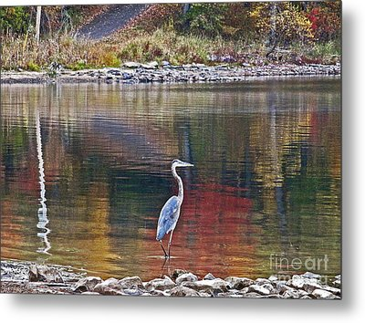Blue Heron In Autumn Metal Print