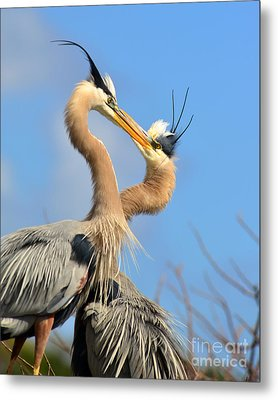 Blue Heron Love Metal Print by Jane Axman