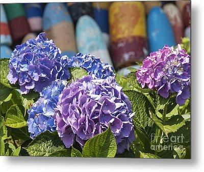 Blue Hydrangea Metal Print by Juli Scalzi