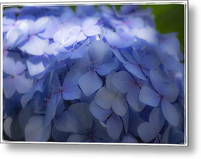 Metal Print featuring the photograph Blue Hydrangea One by Craig Perry-Ollila