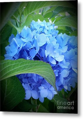 Blue Hydrangea Metal Print by Rose Wang