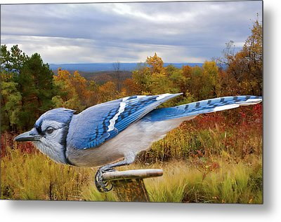Blue Jay Ready For Take-off Metal Print