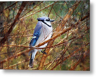 Metal Print featuring the photograph Blue Jay by Trina  Ansel