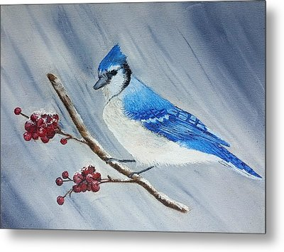 Blue Jay Metal Print by Valorie Cross