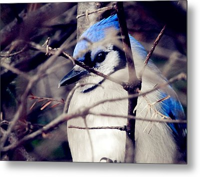 Metal Print featuring the photograph Blue Joy by Zinvolle Art