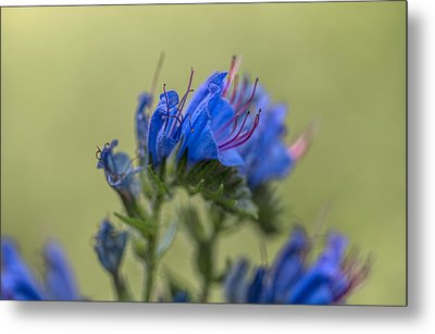 Metal Print featuring the photograph Blue by Leif Sohlman