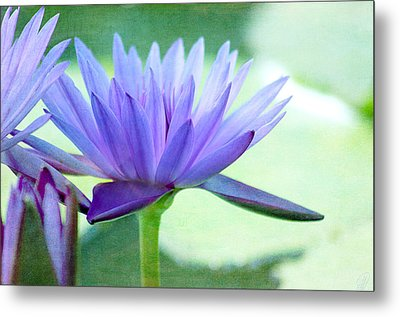 Blue Lily Metal Print by Margaret Hormann Bfa
