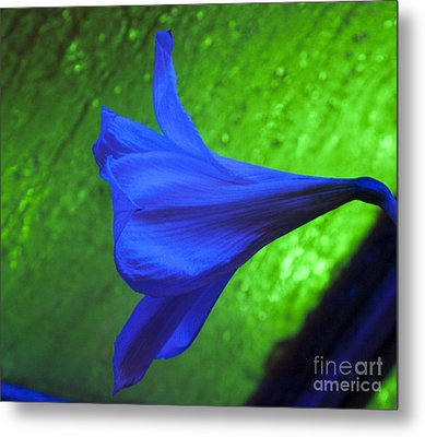Blue Lily On Green Metal Print by Darleen Stry