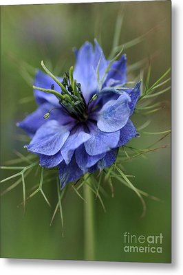 Metal Print featuring the photograph Blue Love by Joy Watson