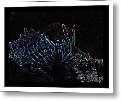 Blue Magic Light Fish  Metal Print