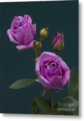 Metal Print featuring the photograph Blue Moon Roses by ELDavis Photography