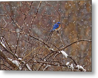 Metal Print featuring the photograph Blue Norther by Gary Holmes
