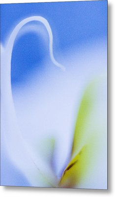 Metal Print featuring the photograph Blue Orchid Abstract by Bradley R Youngberg