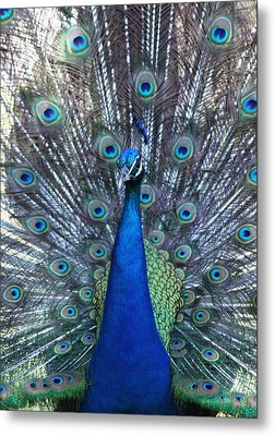 Blue Pearl Of Nature Metal Print