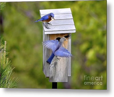 Metal Print featuring the photograph Blue Plate Special by Nava Thompson
