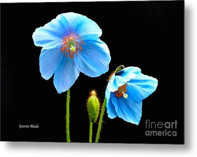 Blue Poppy Flowers # 4 Metal Print