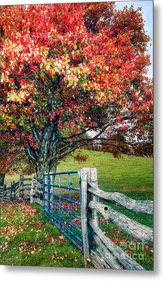 Blue Ridge - Fall Colors - Autumn Maple Tree Fence Gate I Metal Print by Dan Carmichael