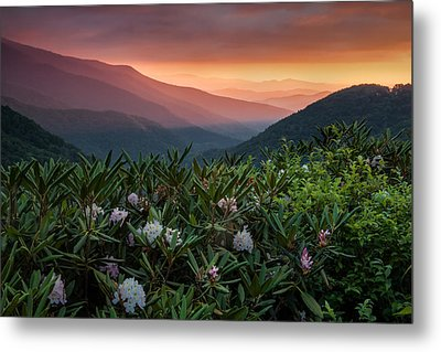Blue Ridge Morn With Rose Bay Rhododendron  Metal Print by Rob Travis