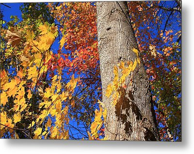 Blue Ridge Parkway Fall Foliage-north Carolina Metal Print by Mountains to the Sea Photo