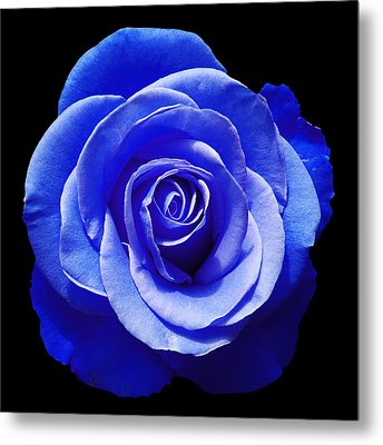 Blue Rose Metal Print by Aimee L Maher Photography and Art Visit ALMGallerydotcom