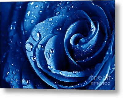Blue Roses Metal Print by Boon Mee